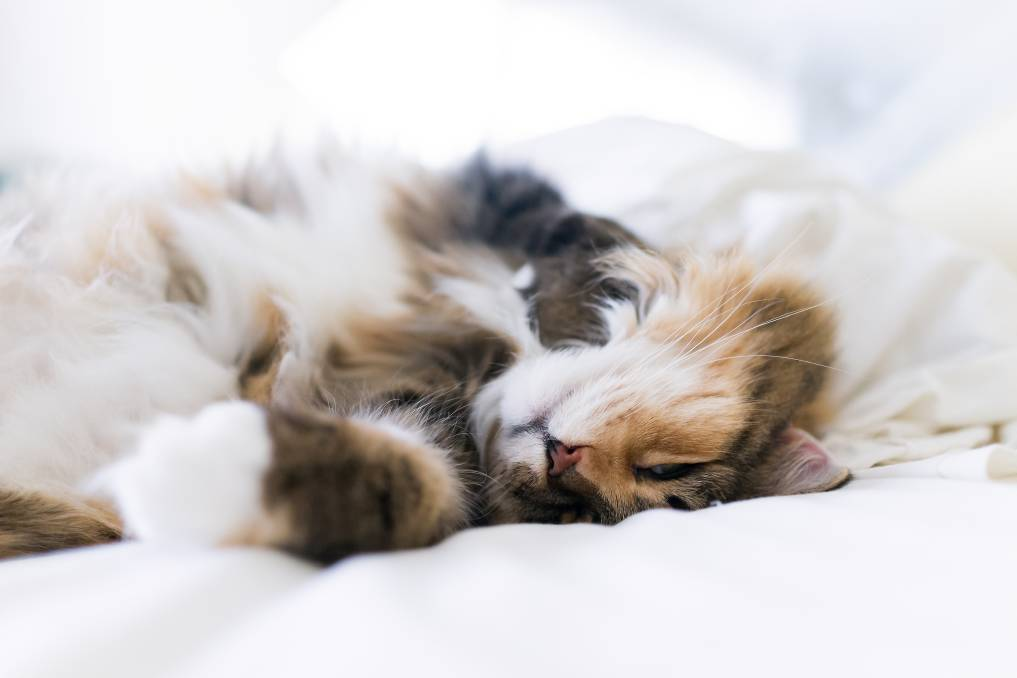Support: Pets offer comfort but they do make some mess. Pictures: Shutterstock.